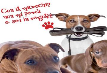 Avviso ai proprietari di cani